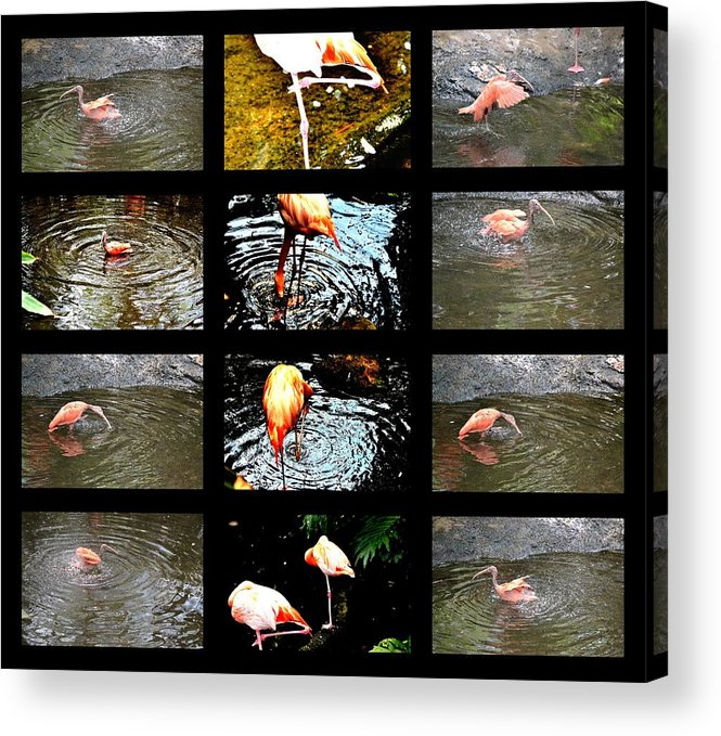 Bird's Collage-3 Acrylic Print featuring the photograph Birds' Collage-3 by Anand Swaroop Manchiraju