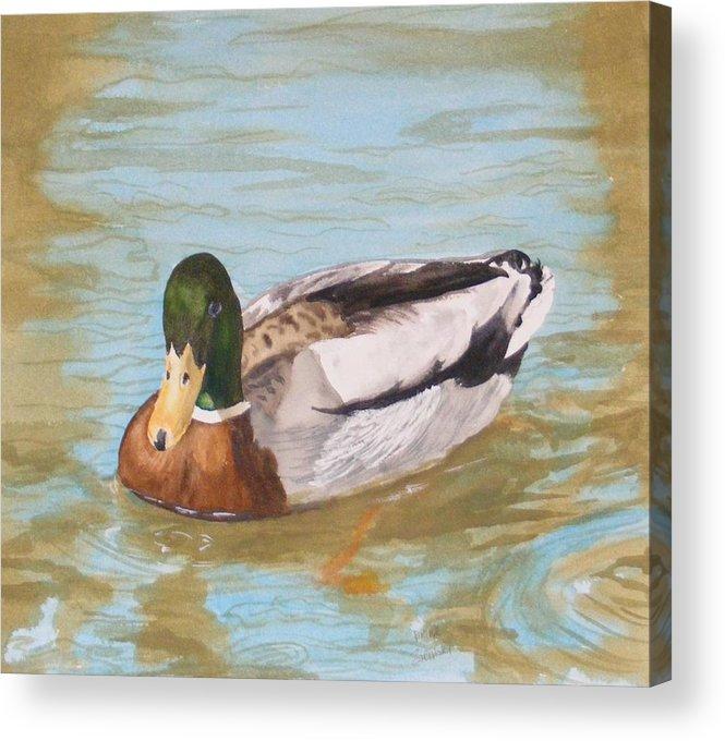 Duck Mallard Water Acrylic Print featuring the painting Mallard Drake by Diane Ziemski
