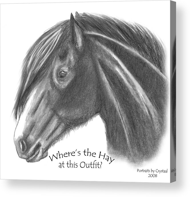 Clydesdale Acrylic Print featuring the drawing Clydesdale by Crystal Suppes