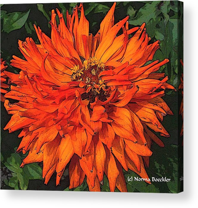 Flower Photography Acrylic Print featuring the painting Zinnia by Norma Boeckler