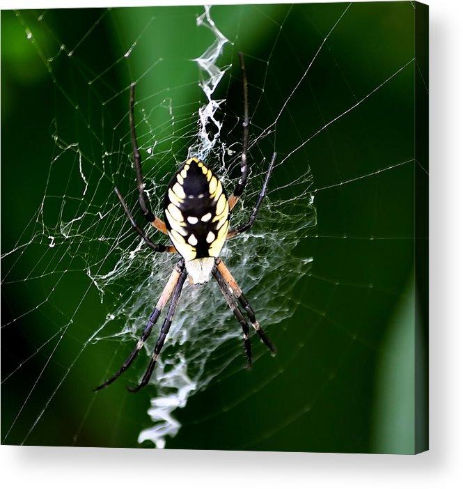 Garden Spider Acrylic Print featuring the photograph Garden Spider by Larry Jones