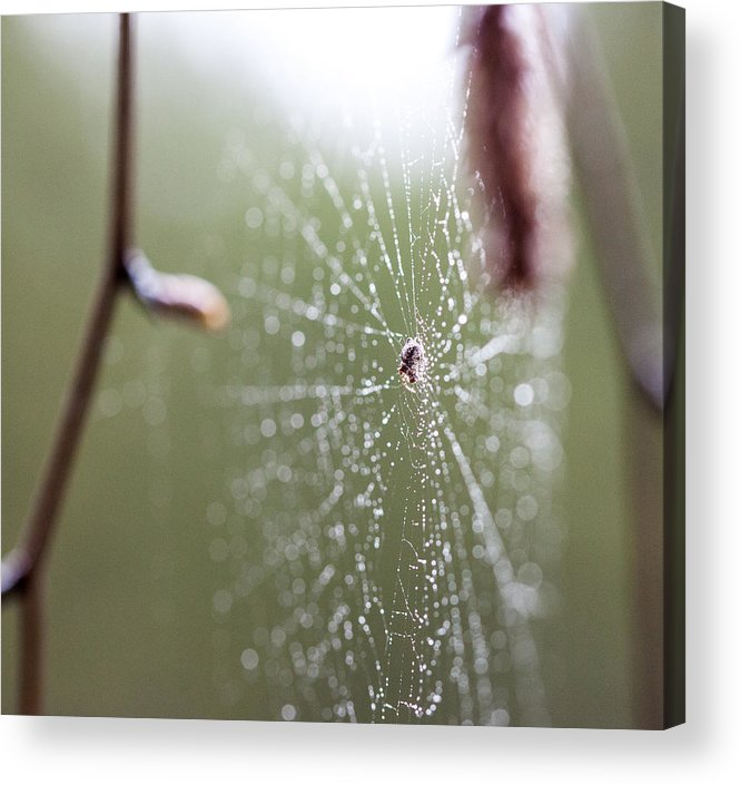 Spider Acrylic Print featuring the photograph Rainy Day Web by Aaron Aldrich