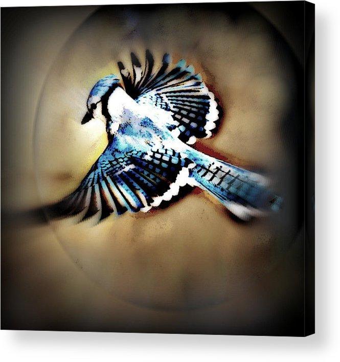 Bluejay Acrylic Print featuring the mixed media Betty Bluejay by YoMamaBird Rhonda