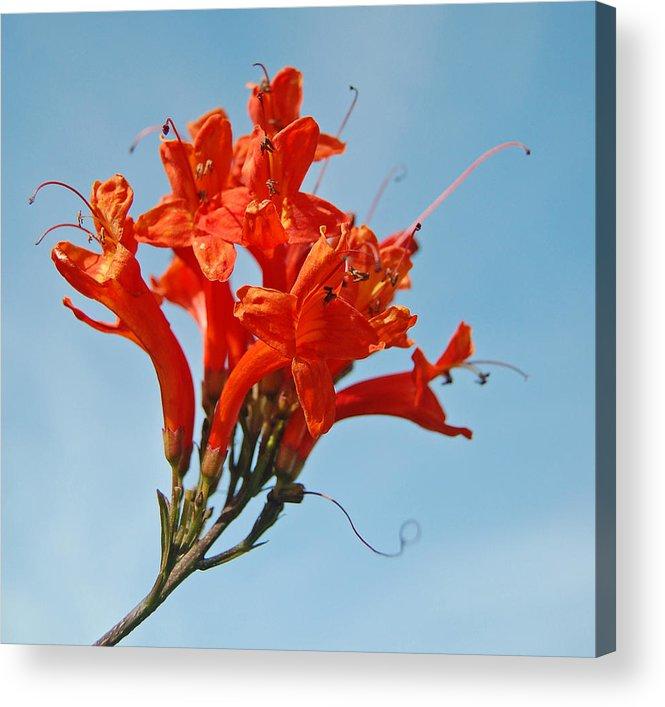 Orange Acrylic Print featuring the photograph Joyful Bunch by Jean Booth