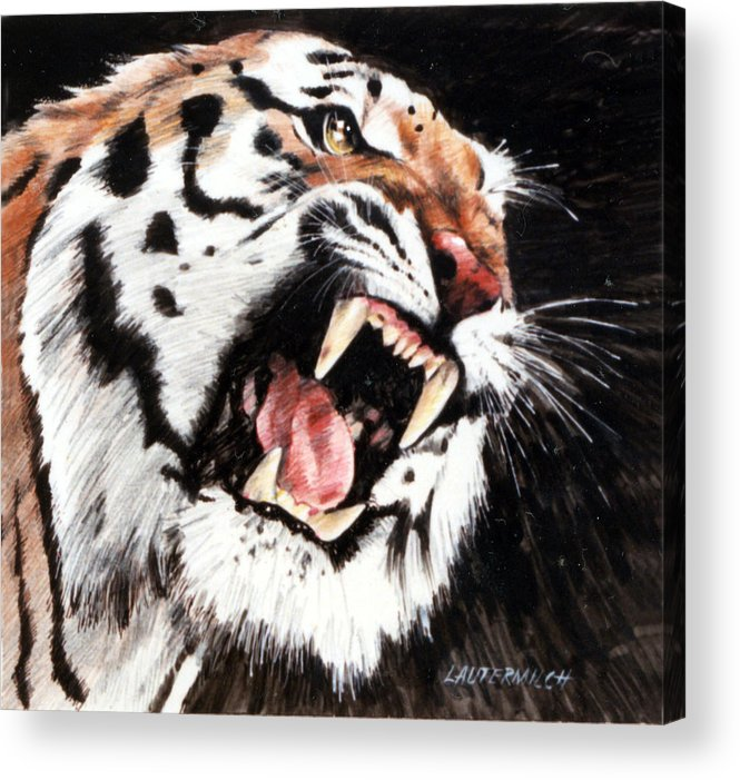 Tiger Roaring Acrylic Print featuring the painting Tiger by John Lautermilch