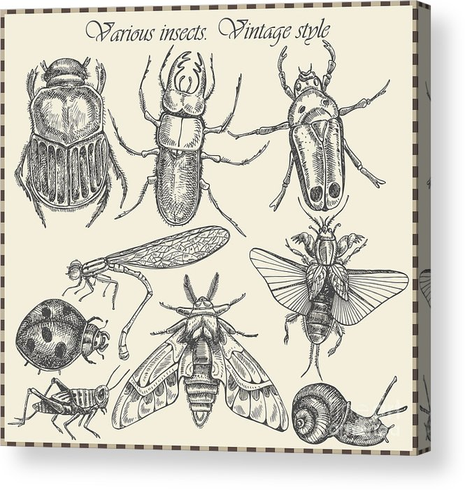 Engraving Acrylic Print featuring the digital art Vector Set Insects In Vintage Style by Horg