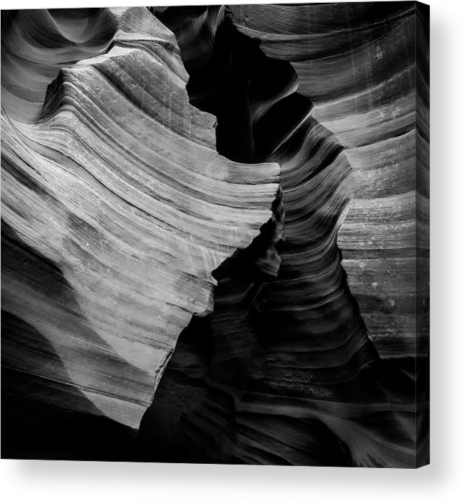 Natural Beauty Of Antelope Acrylic Print featuring the photograph Natural Beauty Of Antelope - Black And White by Jerome Obille
