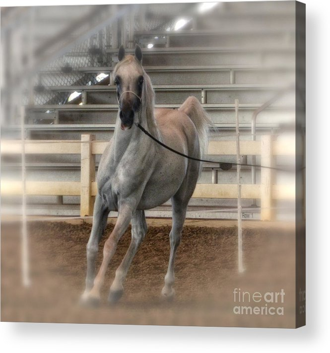 Arab Acrylic Print featuring the photograph Awesome by Tamera James