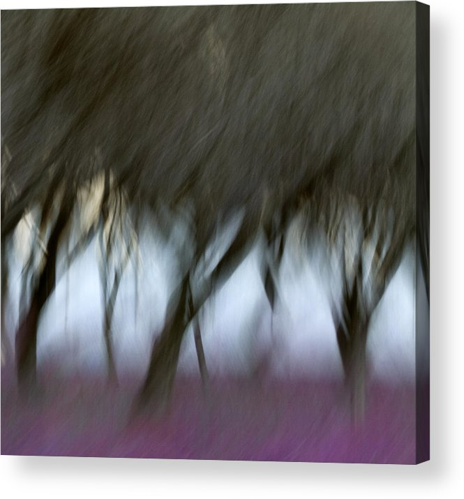 Orchard Acrylic Print featuring the photograph Orchard In Springtime by Carol Leigh