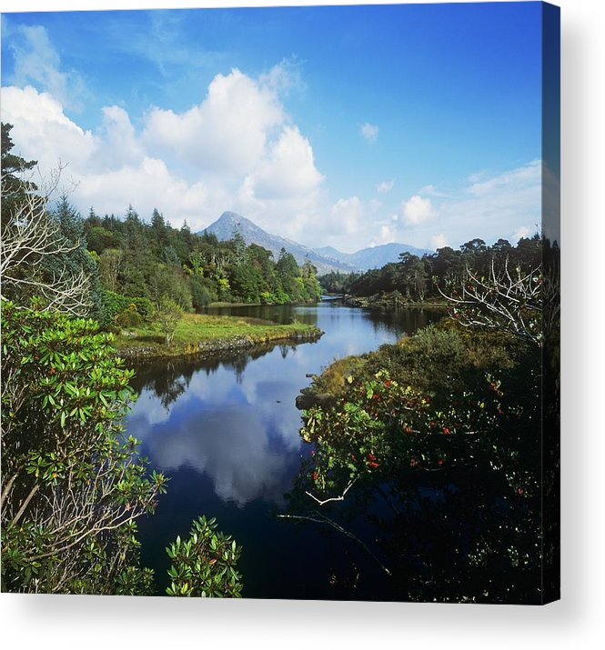 Co Galway Acrylic Print featuring the photograph River Passing Through A Forest by The Irish Image Collection