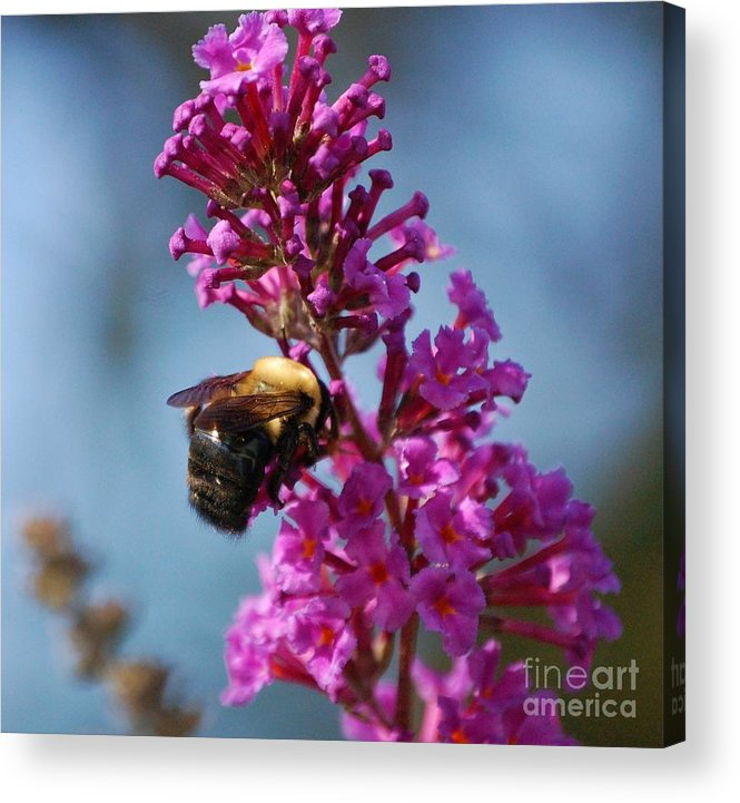 Bee Acrylic Print featuring the photograph Buzzed by Debbi Granruth
