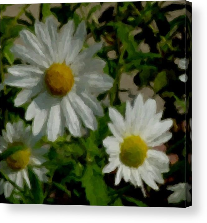 Daisy Acrylic Print featuring the digital art Daisies By The Number by Anita Burgermeister