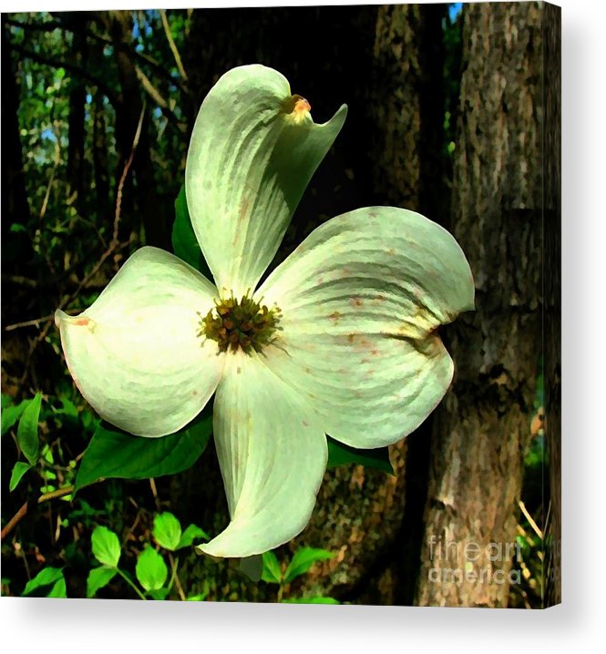 Dogwood Blossom Acrylic Print featuring the photograph Dogwood Blossom I by Julie Dant