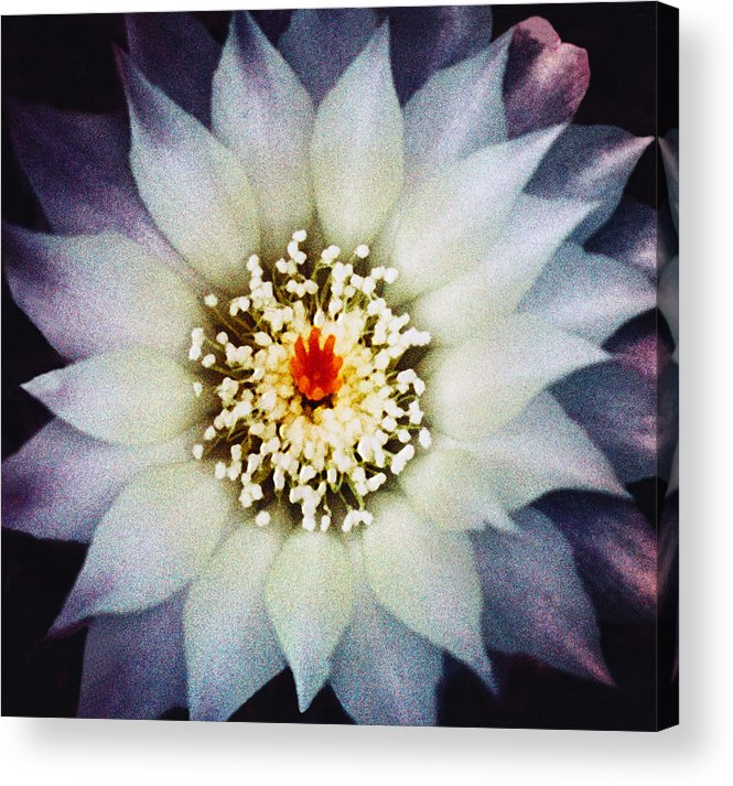 Floral Acrylic Print featuring the photograph Floral Closeup One by Robert Gladwin