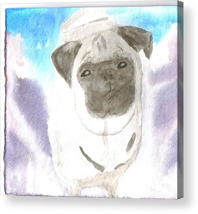 Pug Dog Watercolor Acrylic Print featuring the painting Pug by Warren Thompson
