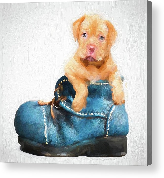 Akc Acrylic Print featuring the photograph Pup In A Shoe by Robert Kinser