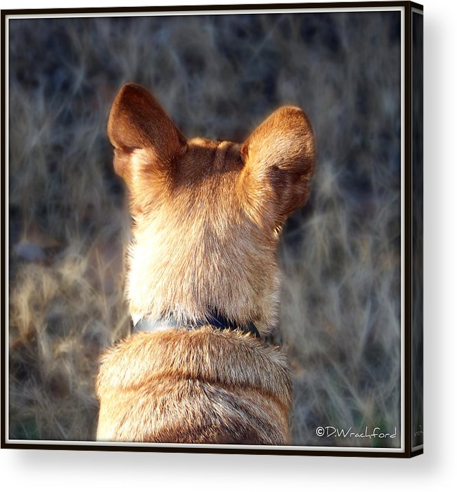 Chihuahua Acrylic Print featuring the photograph Rocky by Donna Wrachford