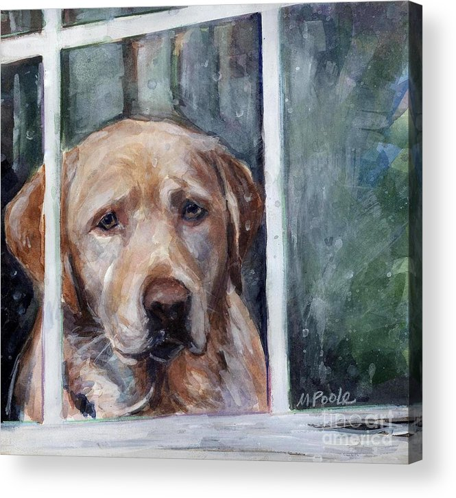 Yellow Dog Acrylic Print featuring the painting Homebody by Molly Poole