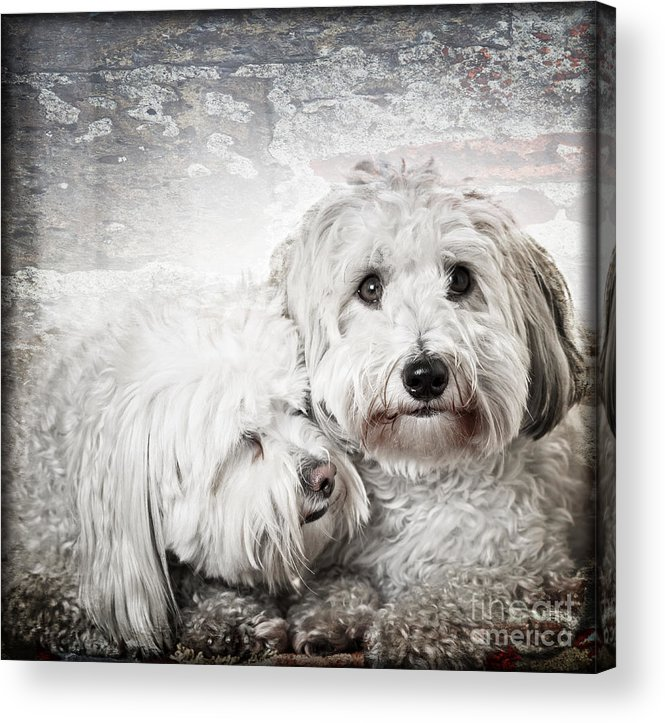 Dogs Acrylic Print featuring the photograph Together by Elena Elisseeva