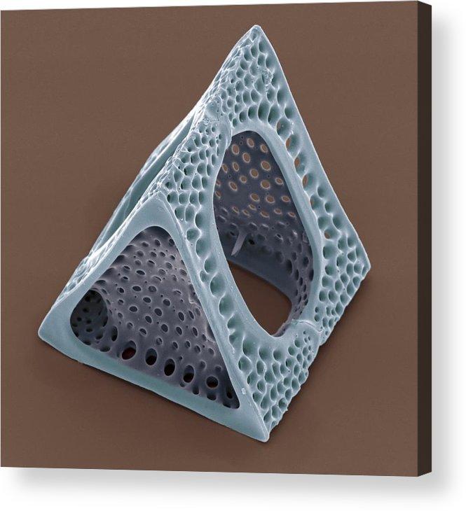 Triceratium Sp. Acrylic Print featuring the photograph Diatom, Sem by Steve Gschmeissner