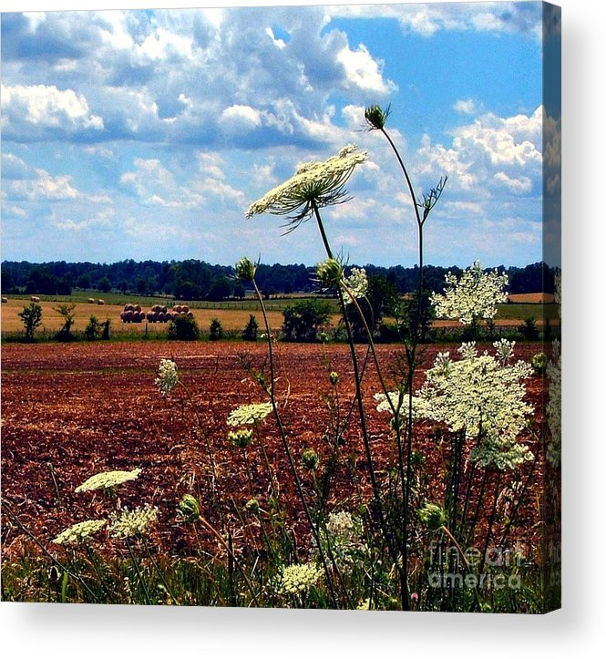 Queen Annes Lace Acrylic Print featuring the photograph Queen Annes Lace And Hay Bales by Julie Dant