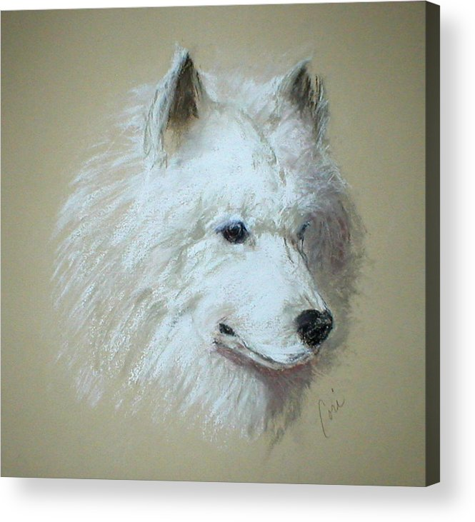Dog Acrylic Print featuring the drawing Arctic Serenity by Cori Solomon