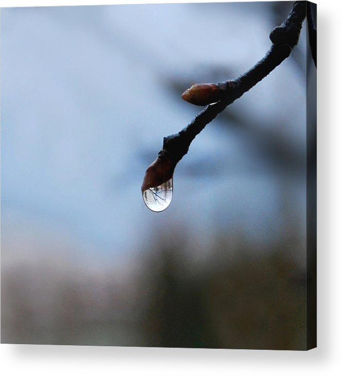 Rain Drop Acrylic Print featuring the photograph Letting Go by Marilynne Bull
