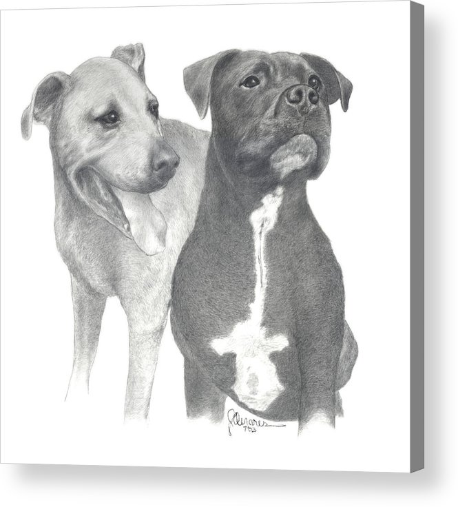 Pencil Drawing Print Acrylic Print featuring the drawing Dippy And Muggs by Joe Olivares