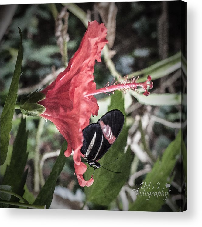Hibiscus Acrylic Print featuring the photograph Red Hibiscus by Dorothy Hilde
