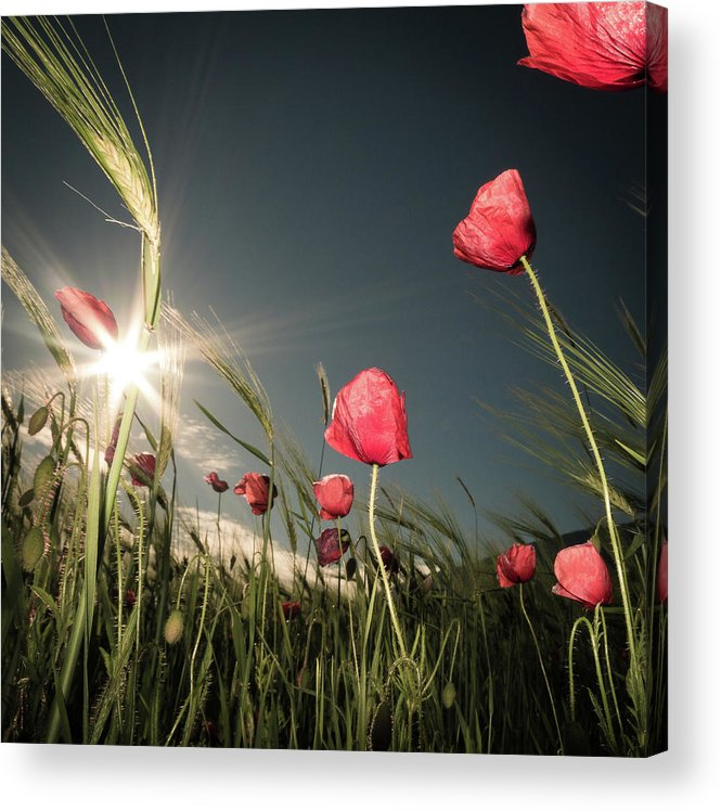 Flower Acrylic Print featuring the photograph Summer Is Here by Petra Dvorak