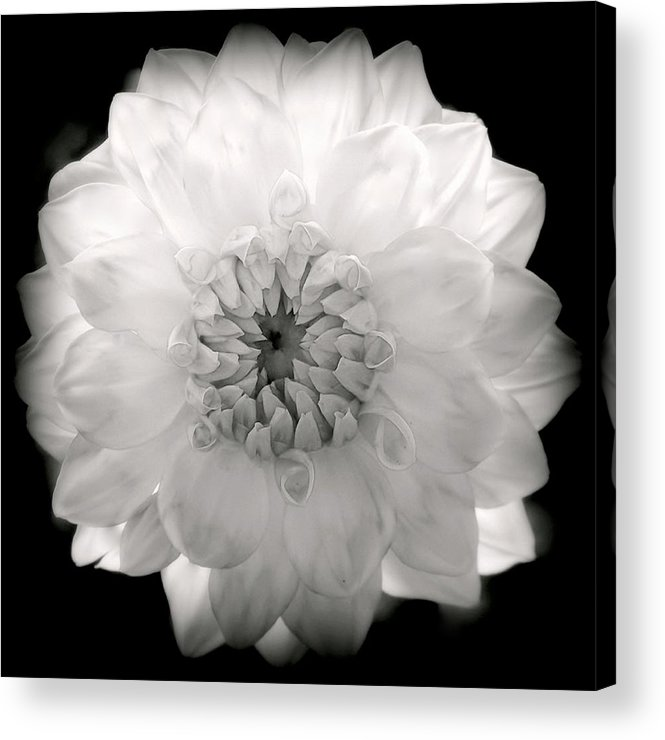 White Flowers Acrylic Print featuring the photograph White Magic by Karen Wiles