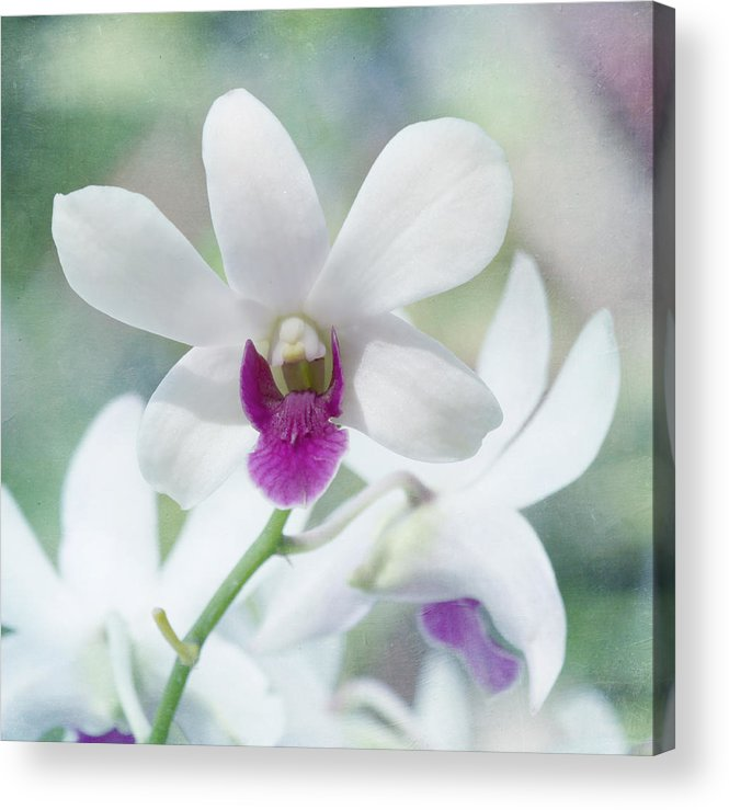 Orchid Acrylic Print featuring the photograph White Orchid by Kim Hojnacki