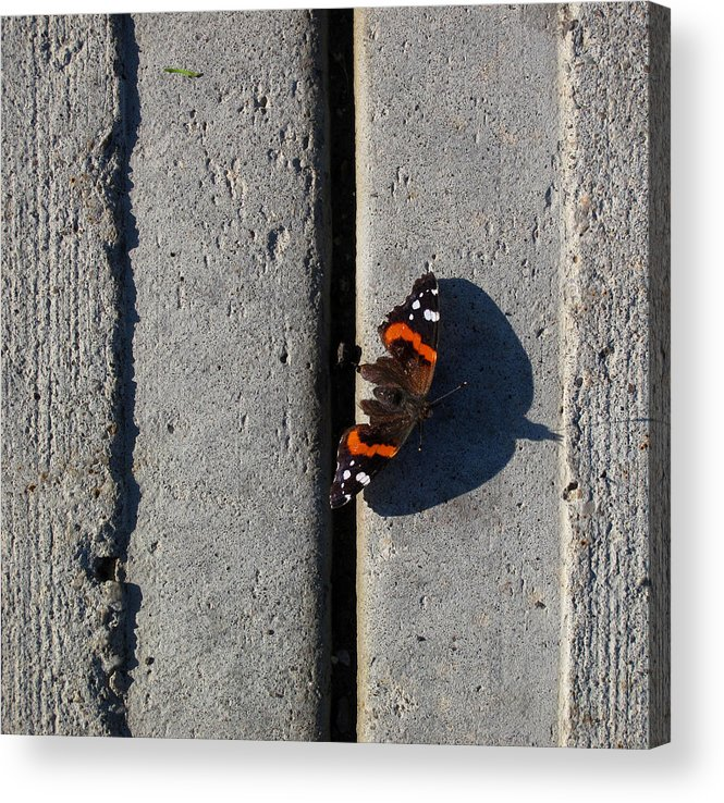 Urban Acrylic Print featuring the photograph Butterfly Day 2 by Lyle Crump