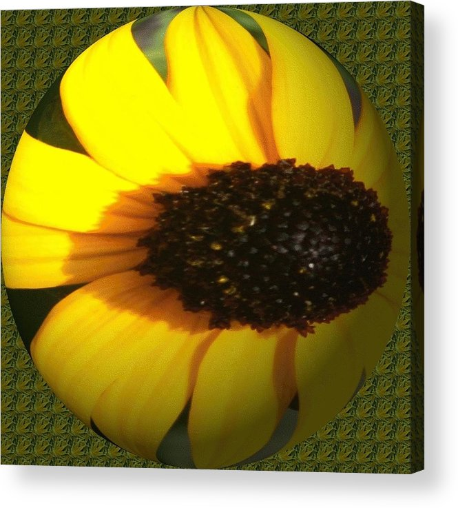 Acrylic Print featuring the photograph Sunny Side by Barbara S Nickerson