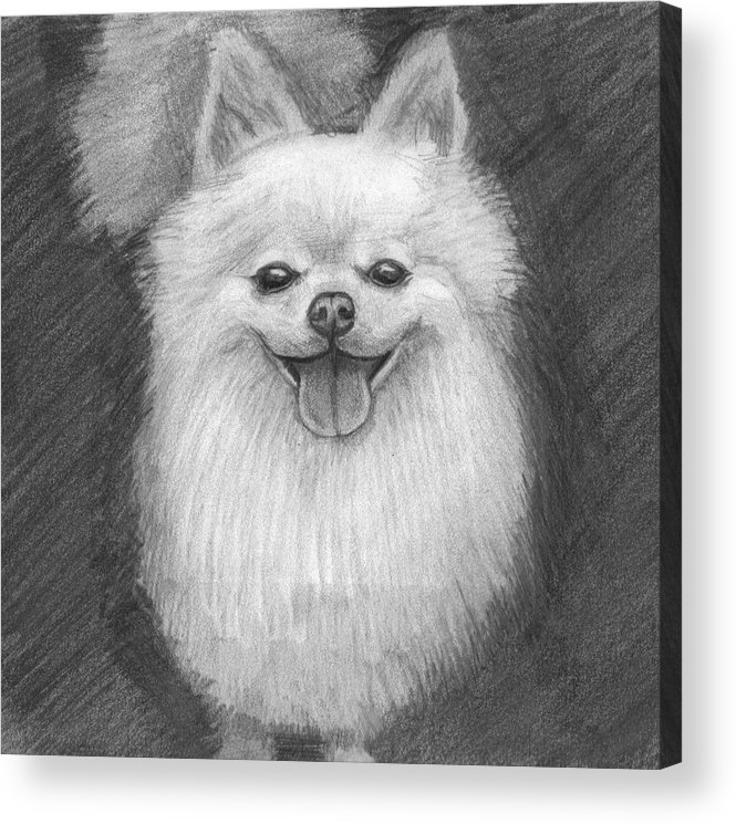 Dog Acrylic Print featuring the drawing A Doggie 4 Xmas by Katie Alfonsi