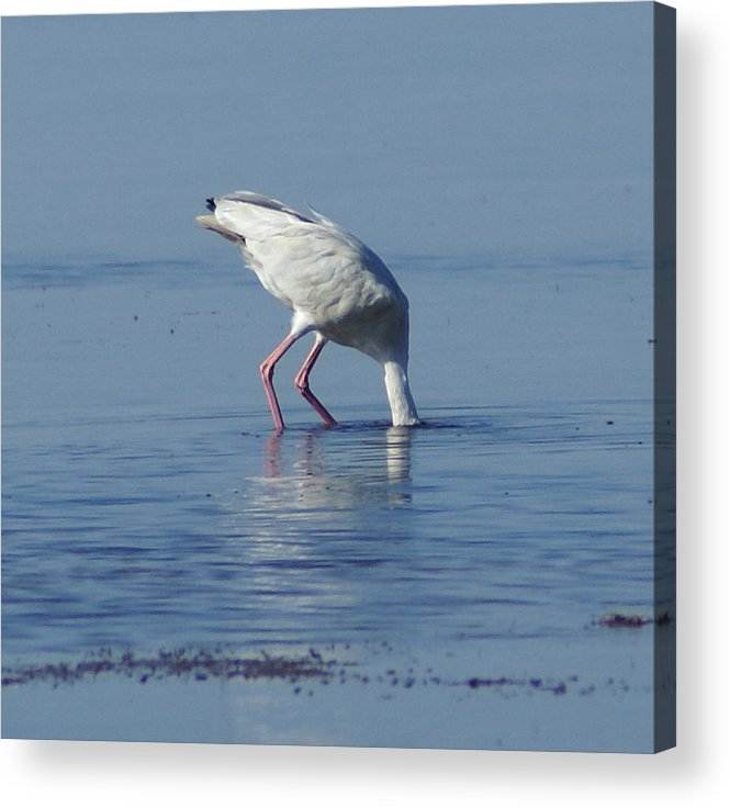Acrylic Print featuring the painting In Search Of by Debbie May