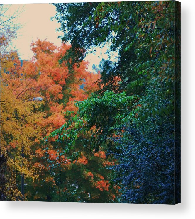 Trees Acrylic Print featuring the photograph Rainbow Of Fall by Trudi Southerland