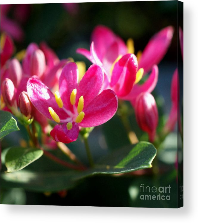 Pink Acrylic Print featuring the photograph Sunkissed by Valerie Fuqua