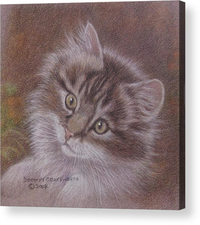 Acrylic Print featuring the painting Tabby Kitten by Dorothy Coatsworth