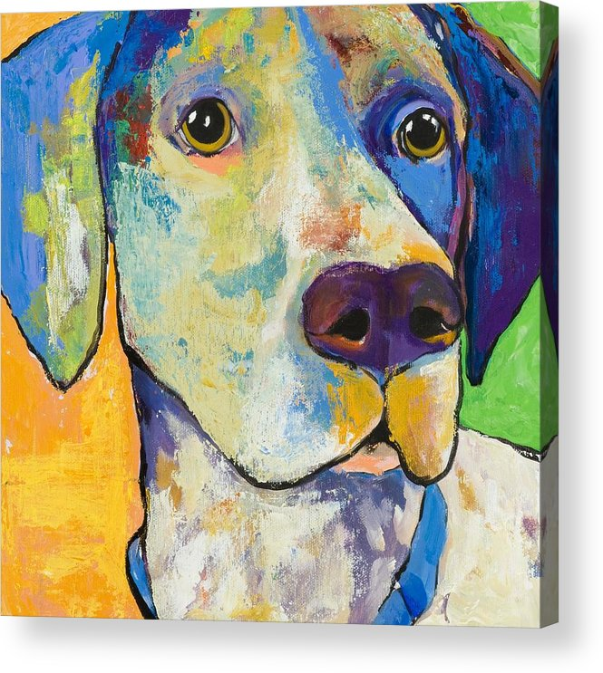 German Shorthair Animalsdog Blue Yellow Acrylic Canvas Acrylic Print featuring the painting Yancy by Pat Saunders-White