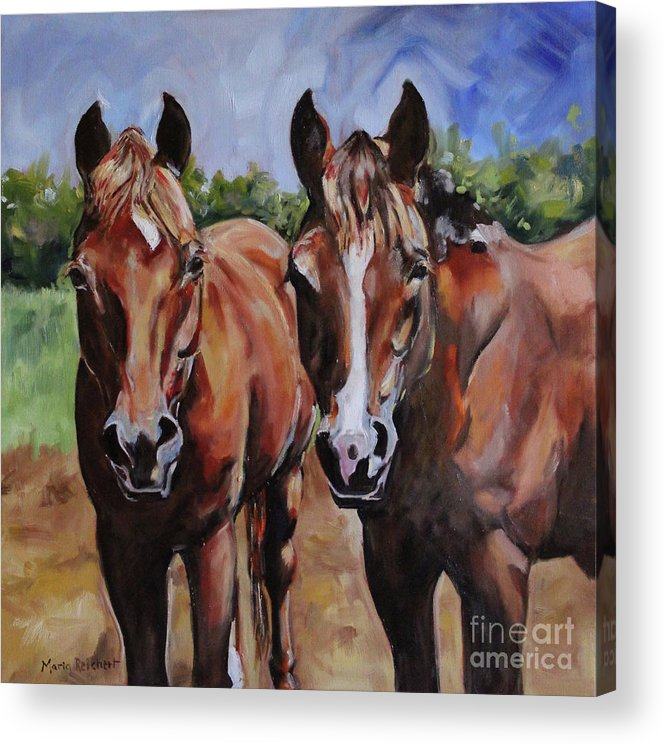 Horse Acrylic Print featuring the painting Horse Art by Maria Reichert