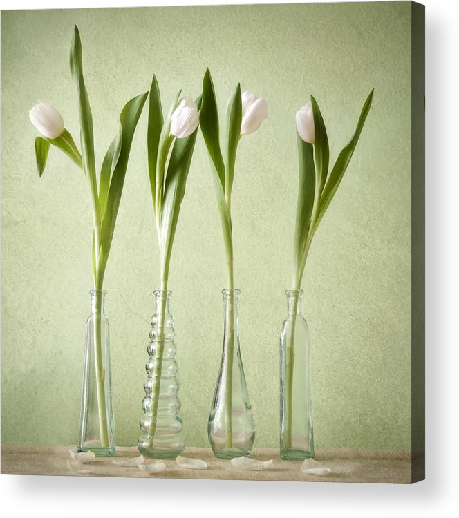 Tulpen Acrylic Print featuring the pyrography Waiting For Spring by Steffen Gierok