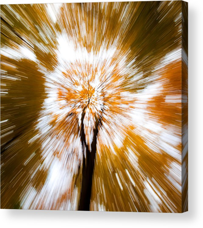 Autumn Woodland Acrylic Print featuring the photograph Autumn Explosion by Dave Bowman