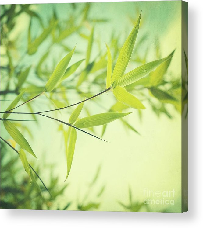 Bamboo Acrylic Print featuring the photograph Bamboo In The Sun by Priska Wettstein