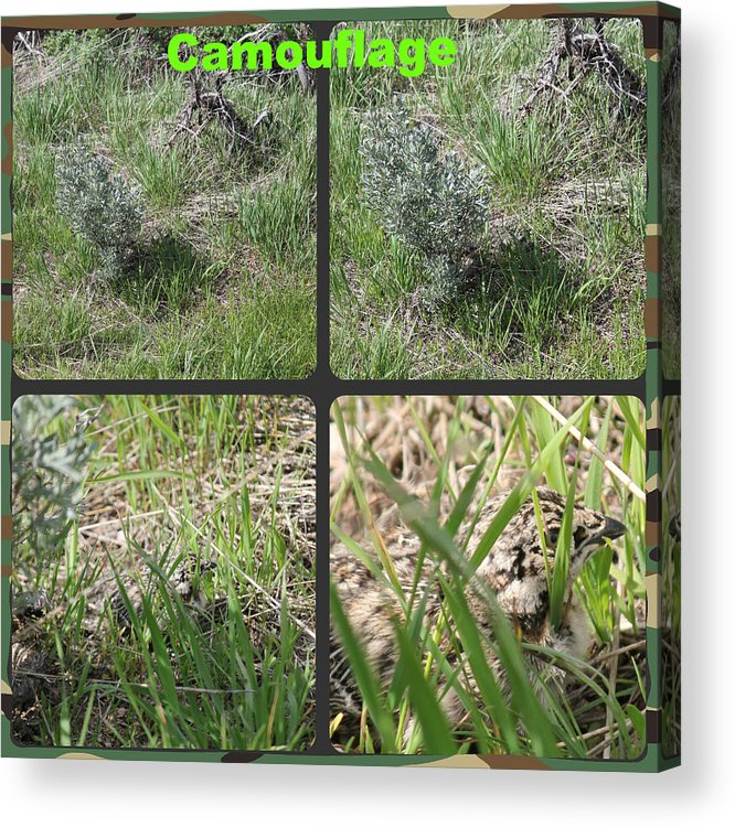 Camouflage Acrylic Print featuring the photograph Camouflage by Roxie Crouch