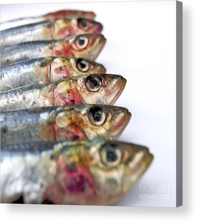 Animal Body Part Acrylic Print featuring the photograph Fishes by Bernard Jaubert