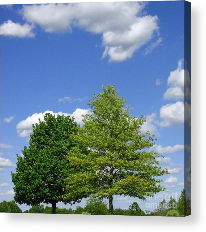 Trees Acrylic Print featuring the photograph Hilltop Trees by Ann Horn