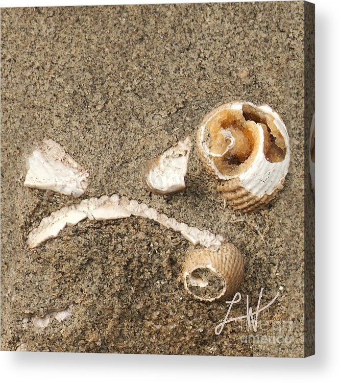 Fossils From Capitola Beach Acrylic Print featuring the photograph In A Forgotten Time by Artist and Photographer Laura Wrede