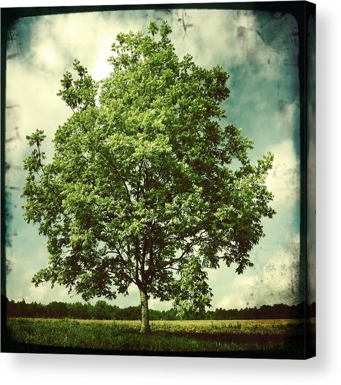 Photography Acrylic Print featuring the photograph June by Sarah Coppola