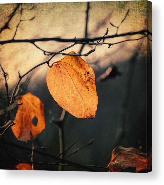 Leaf Acrylic Print featuring the photograph Last Leaves by Taylan Apukovska